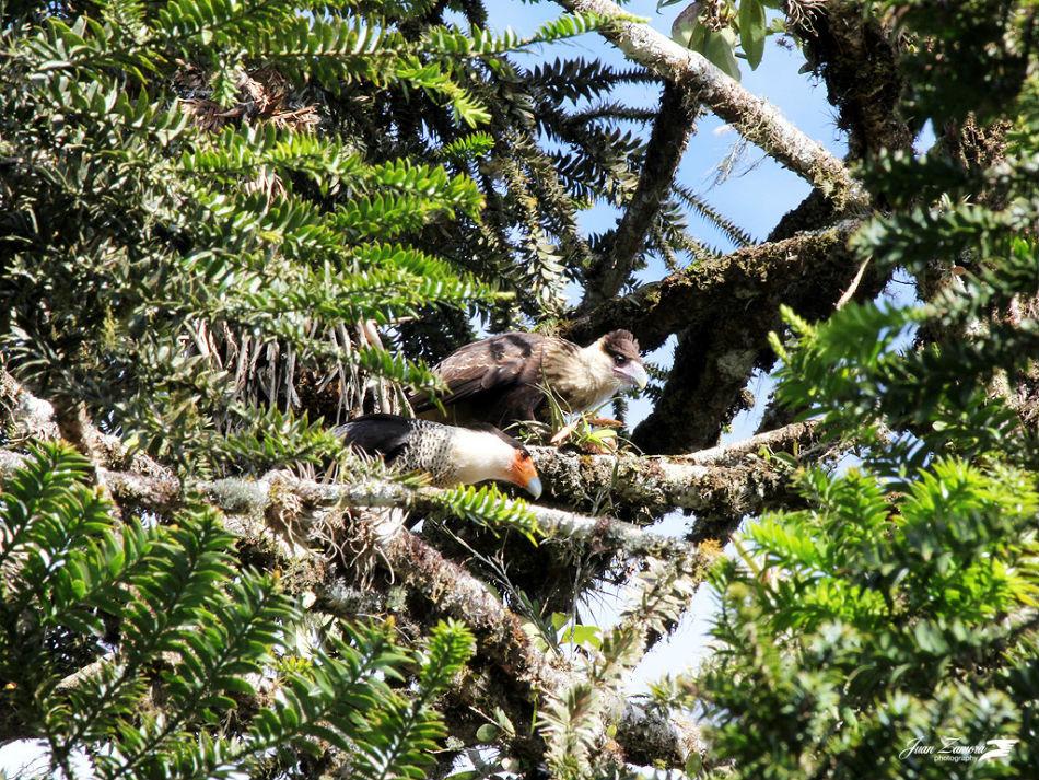 Wilson Botanical Garden Costa Rica