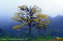 Guápiles, Costa Rica