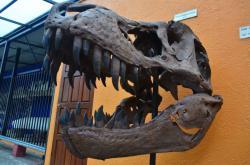 Museo de Ciencias Naturales La Salle, San José