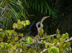 Parc National de Tortuguero, Caribe