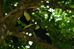 Refugio Nacional de Vida Silvestre Playa Hermosa, Costa Rica