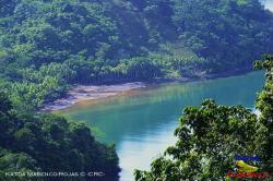 Reserva Forestal Golfo Dulce