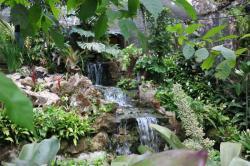 Spirogyra Jardín de Mariposas, Costa Rica