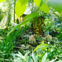 Spirogyra Butterfly Garden, San José