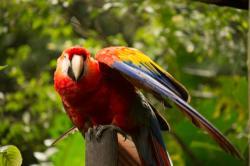 Zoológicos en Costa Rica